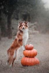 Benefits of feeding dogs pumpkin