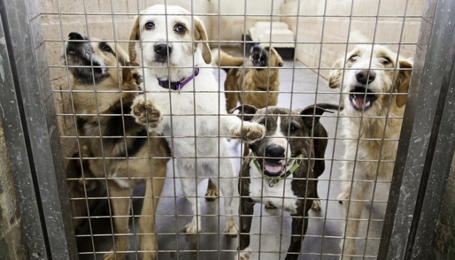 30 Best Animal Shelters That Make America Proud