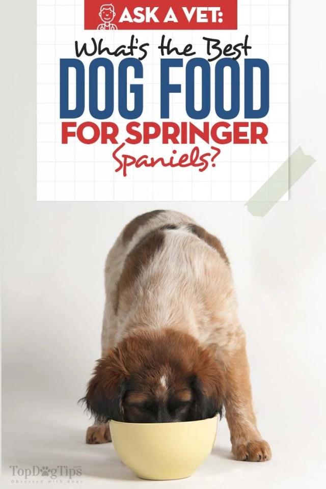 Best Dog Food for Springer Spaniels (Vet Recommended)