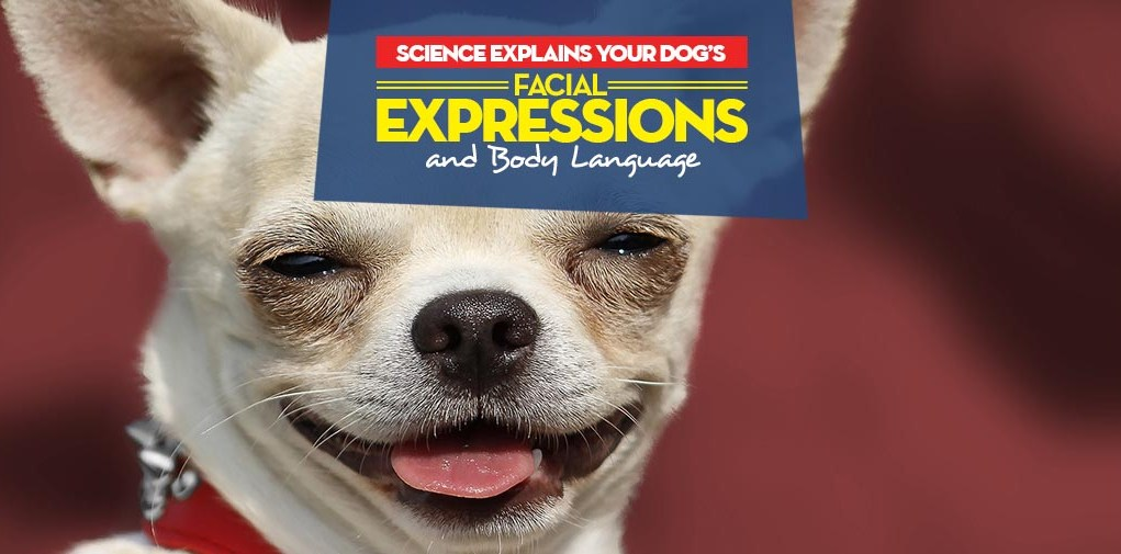 Dog Facial Expressions and Body Language Explained by Science