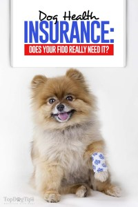 Dog Health Insurance - Does Your Fido Really Need It
