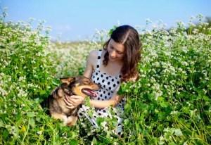 Dog in the buckwheat plant field