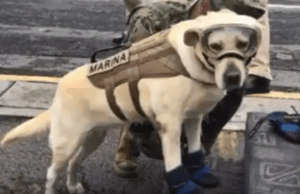 Meet Frida, the Dog Rescuing Humans After Mexico's Earthquake