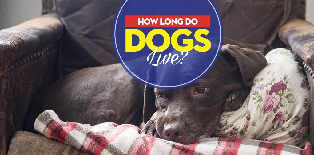 Guide on How Long Do Dogs Live