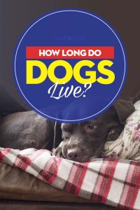 How Long Do Dogs Live Guide