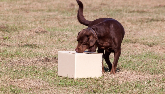 12 Science-based Tips on Mental Stimulation for Dogs