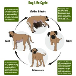 Life Expectancy of Dogs