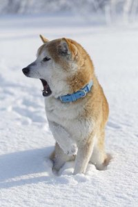 Look For Signs That Your Dog Is Too Cold