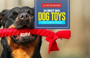 The 14 Best Big Dog Toys for Large Dogs