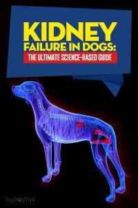 The Kidney Failure in Dogs