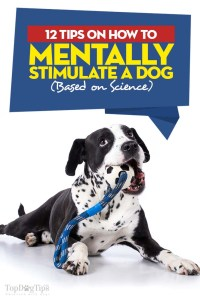 Tips on How to Mentally Stimulate a Dog