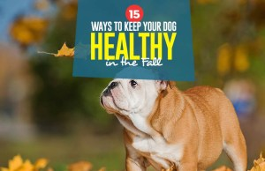 Top 15 Ways to Keep Your Dog Healthy in the Fall
