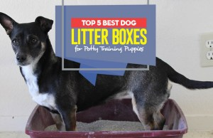 Top 5 Best Dog Litter Boxes for Potty Training Puppies