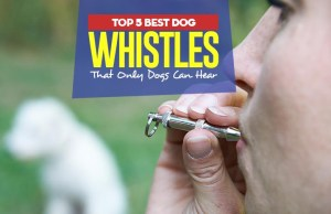 Top 5 Best Dog Whistles That Only Dogs Can Hear