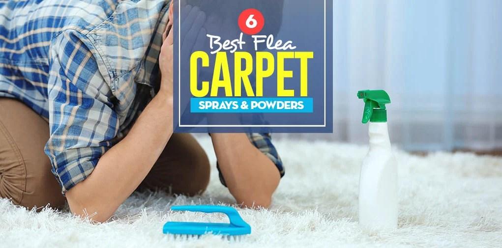Top 6 Best Flea Carpet Sprays & Powders