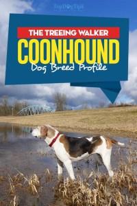Treeing Walker Coonhound Dog Breed Profile