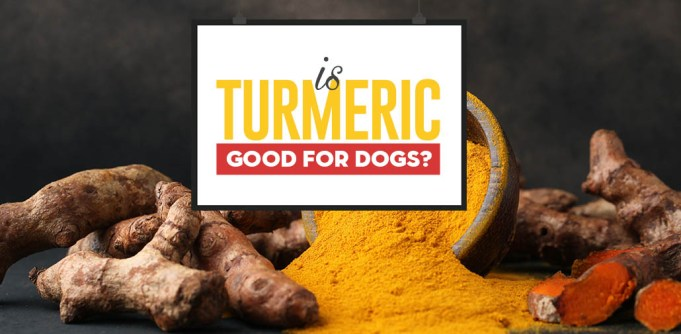 Turmeric for Dogs 101