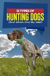 Types of Hunting Dogs and Which One You Need
