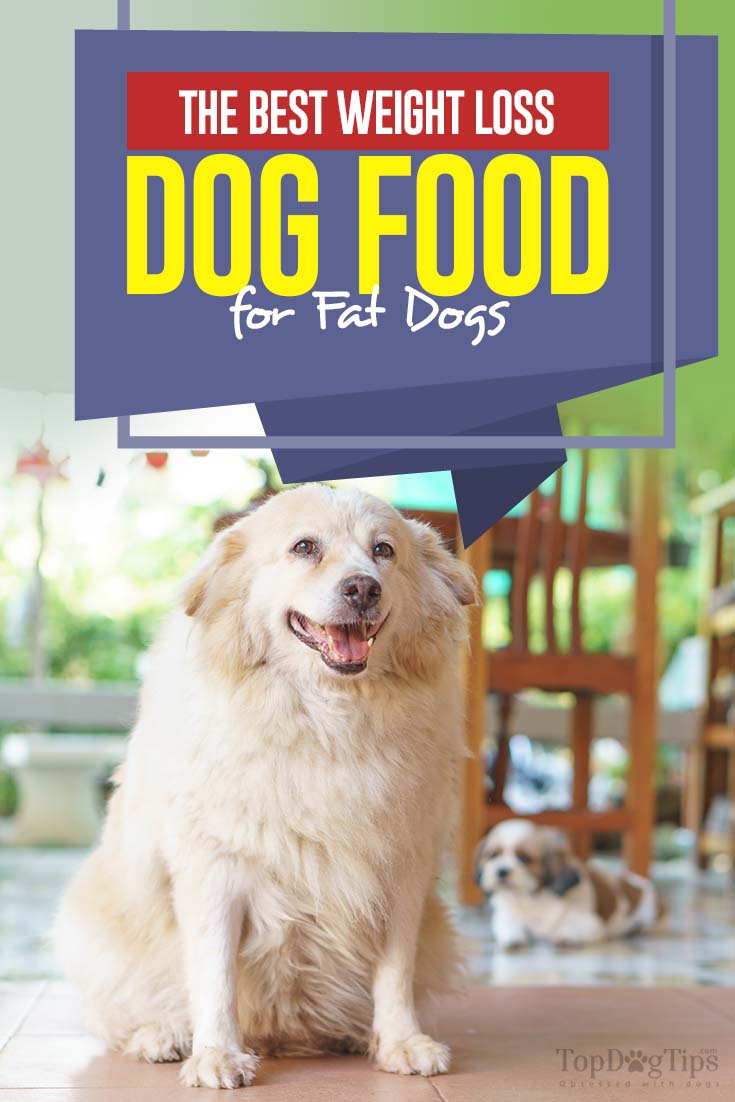 What Is Best Weight Loss Dog Food