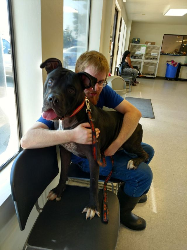 One Dog Saves Another With Blood Transfusion – and Yours Can, Too