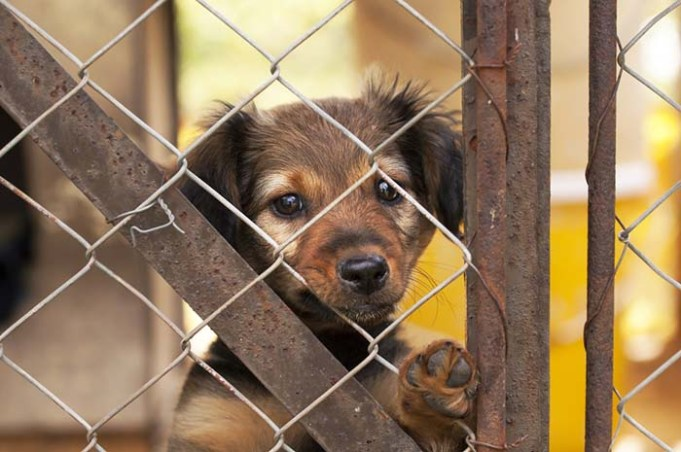 Americans Scammed in Fake Online Puppy Sales