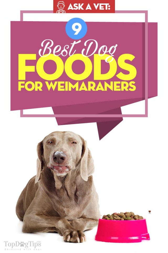 Best Dog Food for Weimaraners - Top 9 Vet Recommended Brands