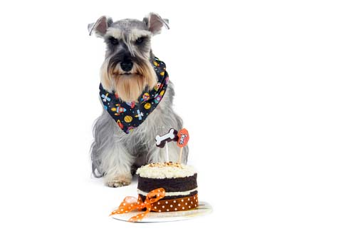 Can dogs have cake