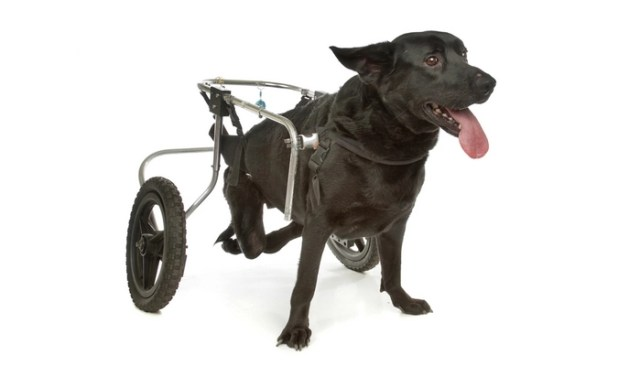 how to make a wheelchair for dogs all by yourself