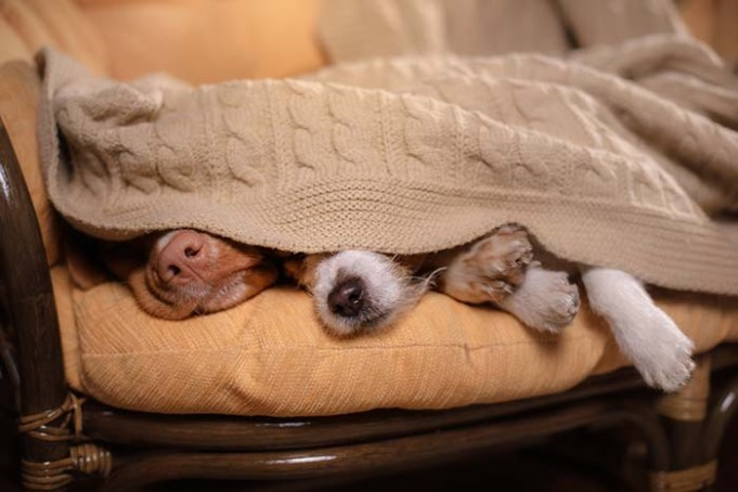 Do Dogs Sleep More In Winter