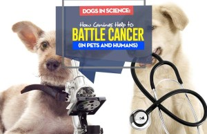 Dogs in Scientific Research - How Dogs Help to Battle Cancer (in pets and humans)