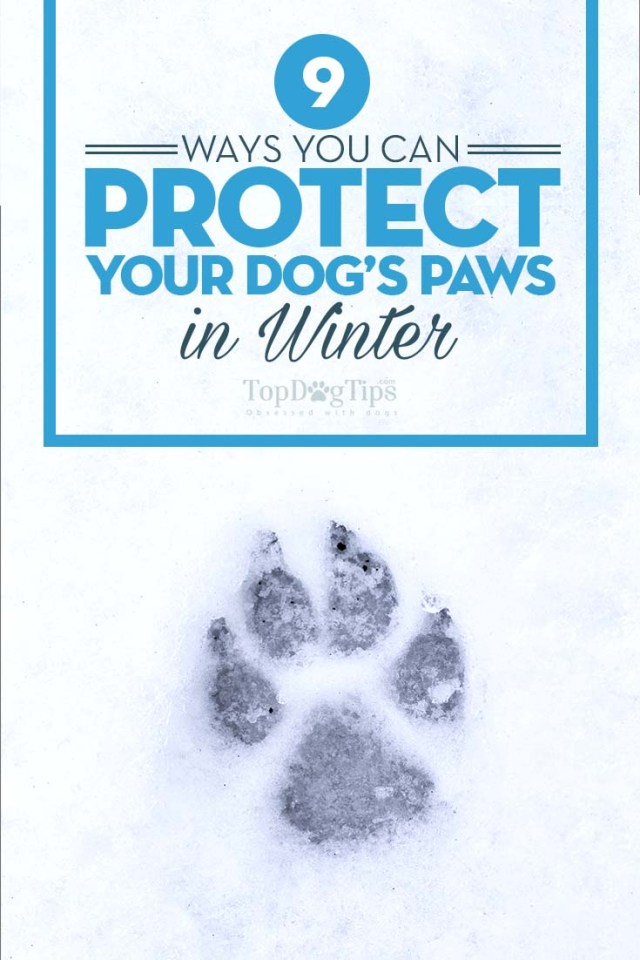 How to Protect Your Dog Paws in Winter
