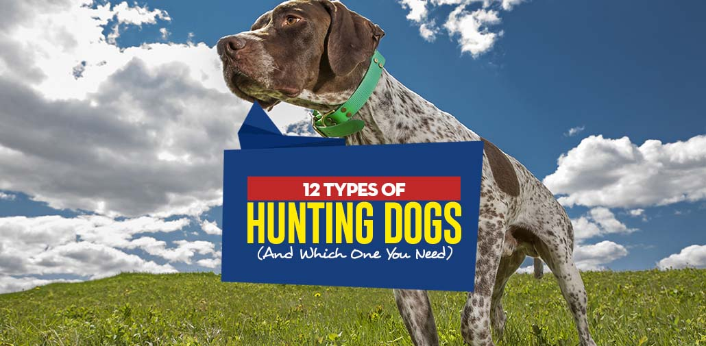 Hunting Dog Types