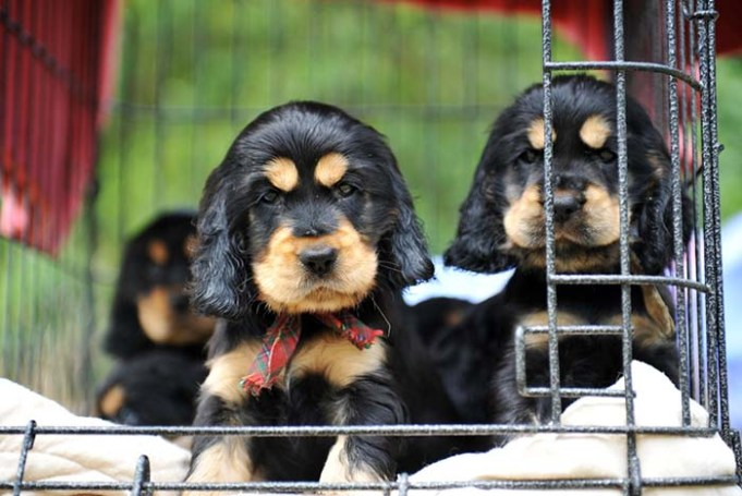 Petland Puppies May Be Spreading Diseases to Humans