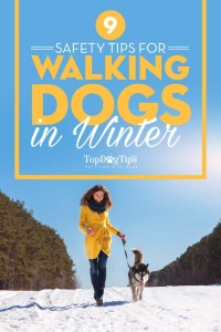 Safety Tips for Walking Dogs In Winter