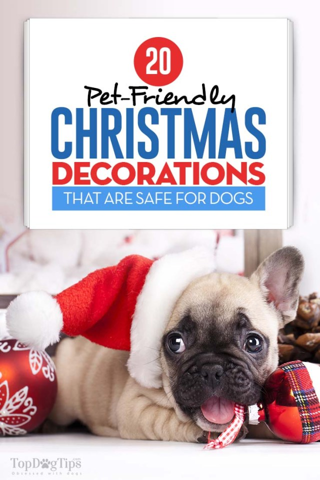 The 20 Pet-Friendly Christmas Decorations Safe for Dogs
