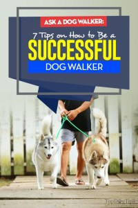 The 7 Tips on How to Be a Successful Dog Walker