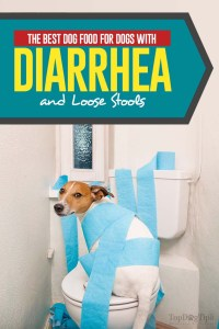 The Best Dog Food for Dogs With Diarrhea and Loose Stools