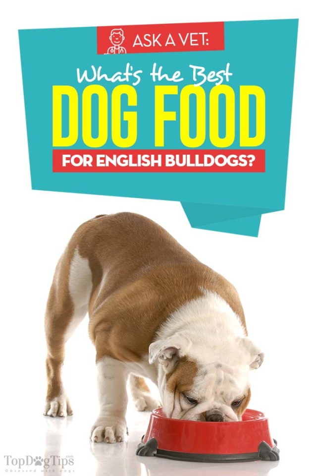 The Best Dog Food for English Bulldogs