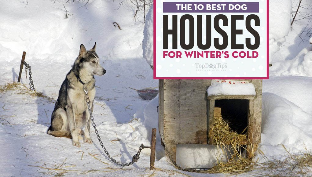 The Best Dog House for Winter Choices