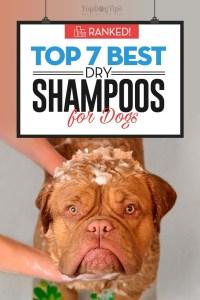 The Best Dry Dog Shampoo