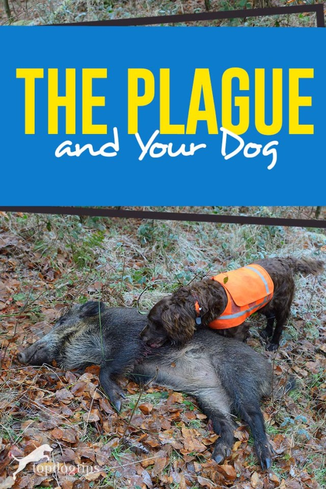 The Plague and Your Dog - The Guide