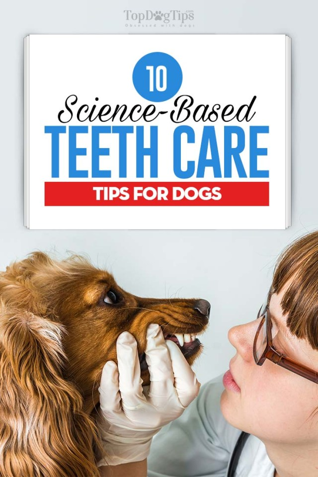 Top 10 Science-Based Dog Teeth Care Tips