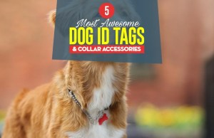 Top 5 Best Dog ID Tags & Collar Accessories