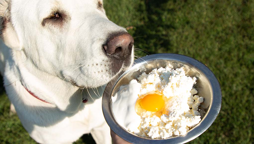 Top Most Healthy Homemade Dog Food Recipes