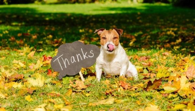 10 Best Dog Thanksgiving Cards