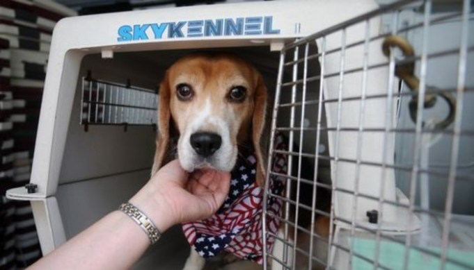 VA's Harmful Experimentation on Dogs Leads to Outrage