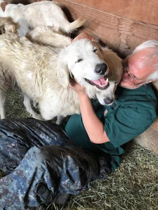 Herding Dog Survives Wildfires After Refusing To Leave Goats Behind