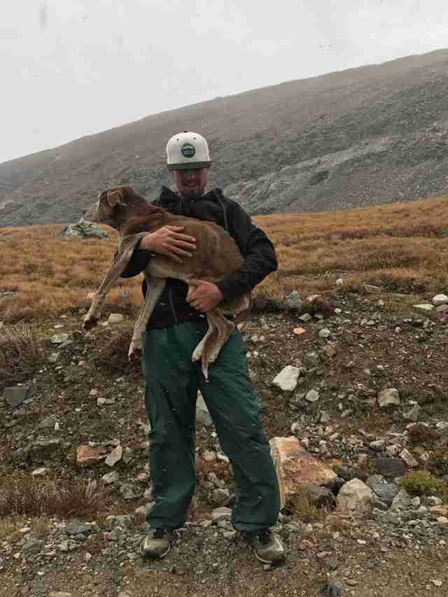 Hikers Rescue Starving Dog Lost for 6 Weeks on a Mountain