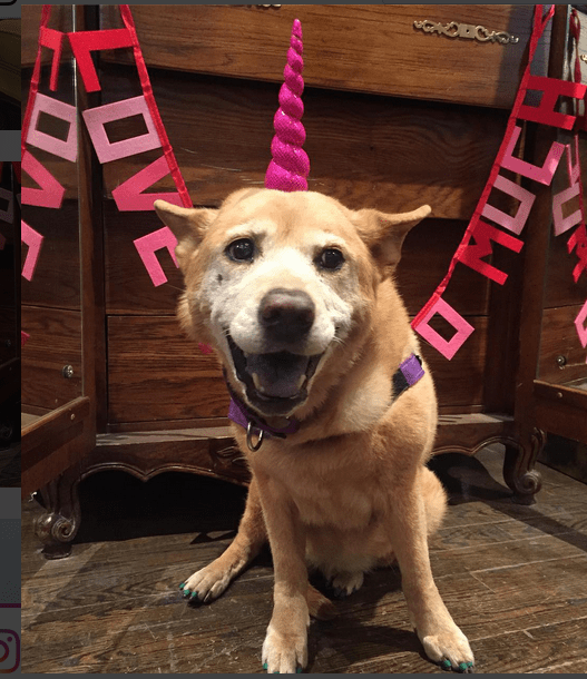 Dog Abandoned and Dying Gets Life Extended by Love
