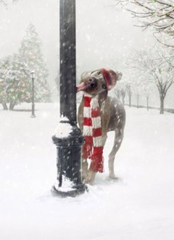 Avanti Press Christmas Cards, Frozen Greetings